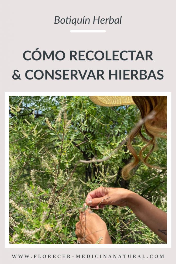 Cómo recolectar y conservar hierbas
