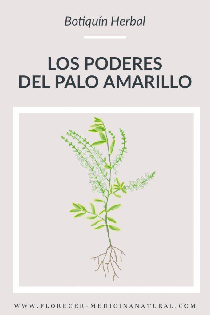 Los poderes del Palo Amarillo