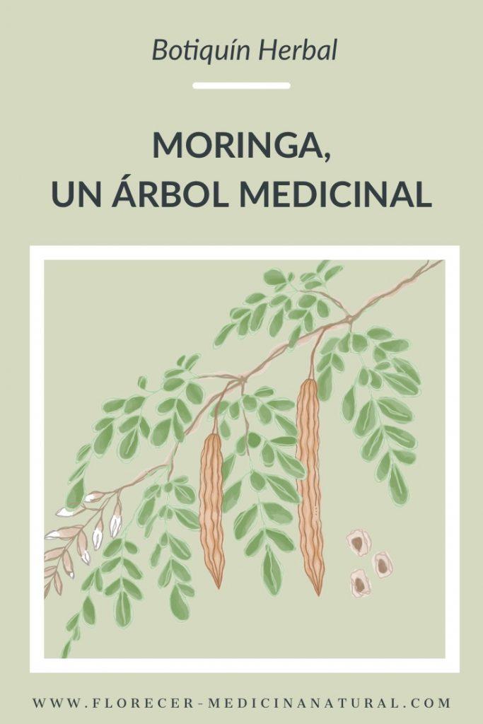 Moringa, un árbol medicinal.